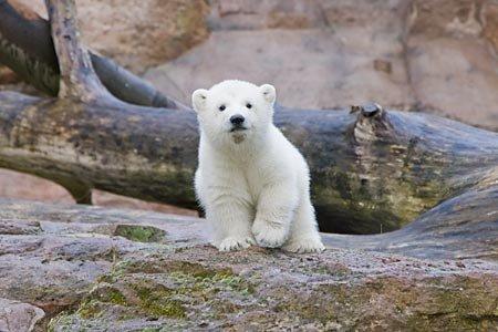 아기 북극곰들~