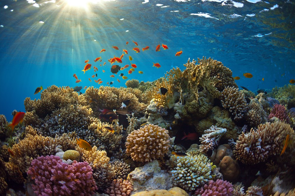 The Caribbean's coral reefs could soon be..