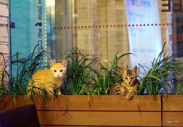 홍대, 위드커피에서 만난 고양이 가족