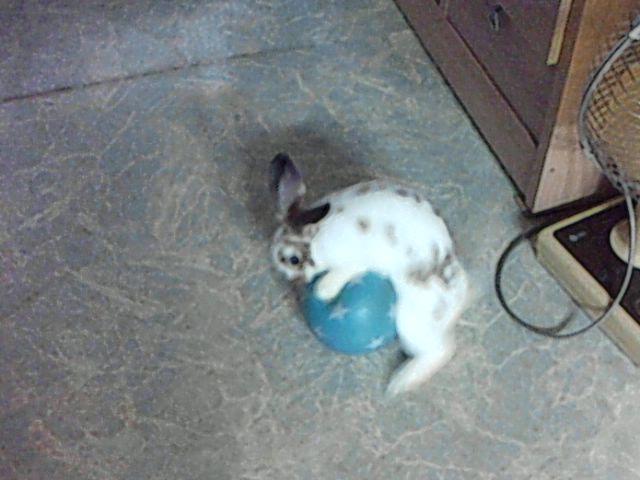 토실이에게 공을 줘봤습니예.
