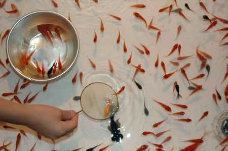 여계가족 제 123화 : 유키의 여동생 대회 Part6