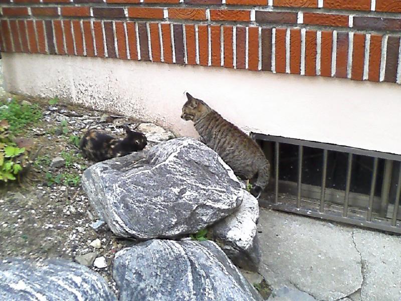 고양이와 조우
