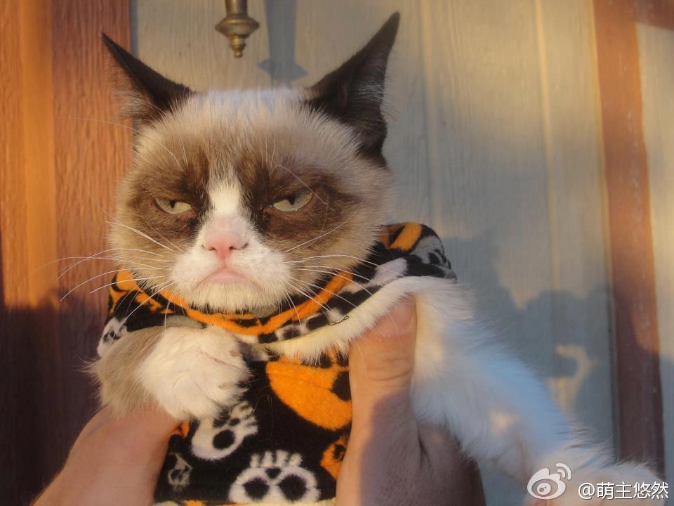 고양이계의 인상파 보스~! 카리스마작렬~