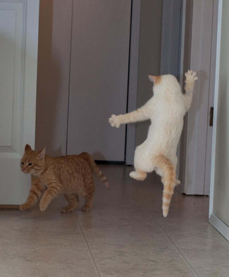 댄싱고양이, 얼씨구나 좋구나 지화자 좋다~~
