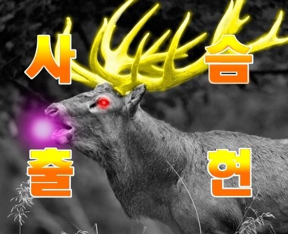 사슴출현!!