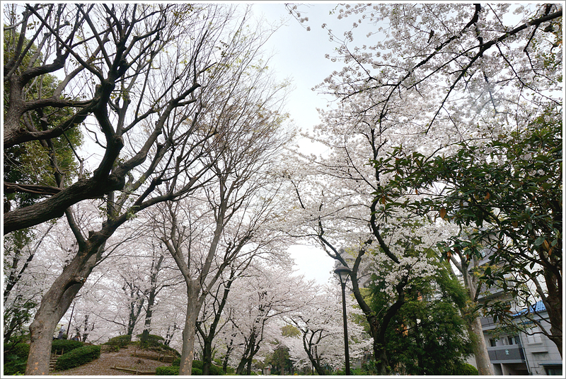 2013년 일본 도쿄 여행 2일차: 스미다 공원을 지나서..