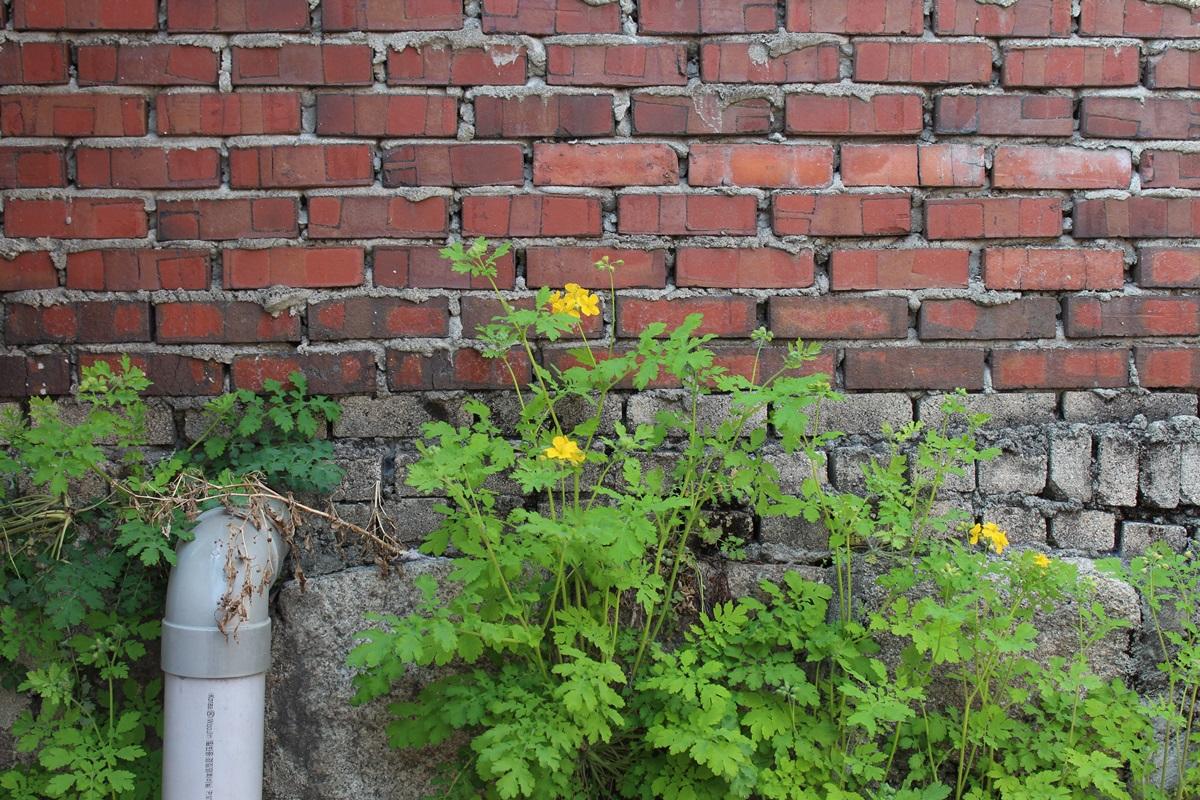 [하루 한 장의 사진]봄이 익어가는 벽