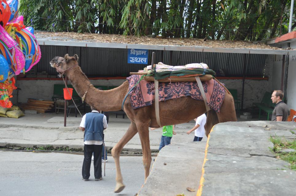 포천경마의 네팔 여행기 - 17
