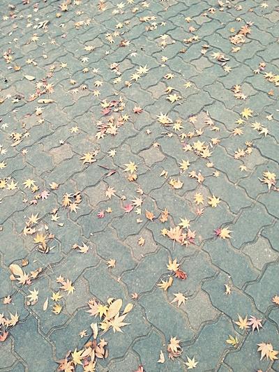 뒤늦은 낙엽