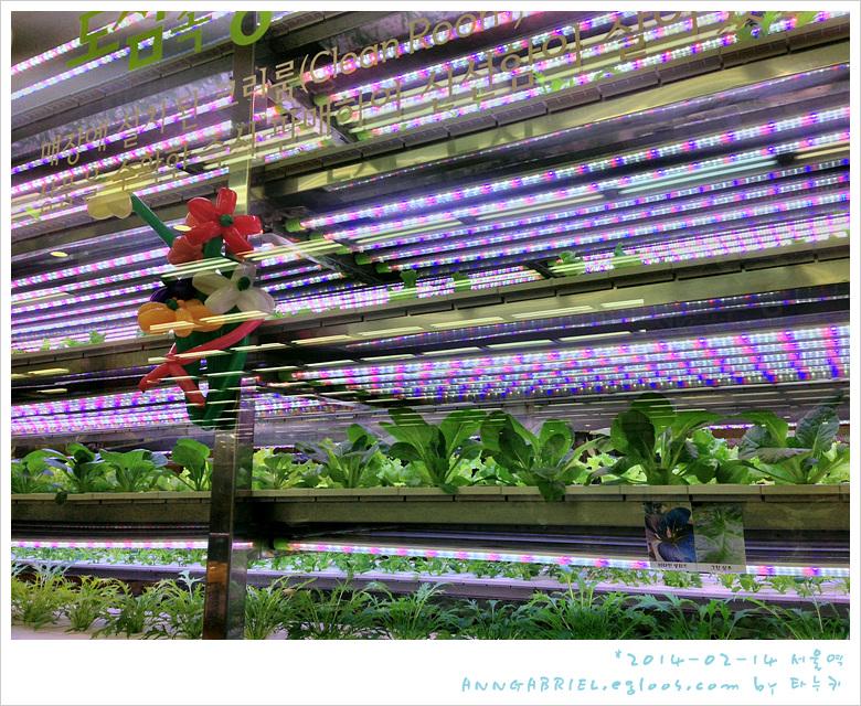 [서울역] LED 식물재배