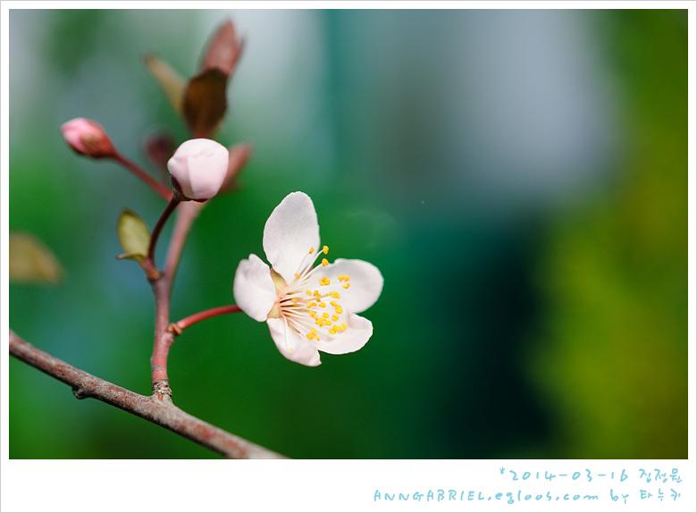 [집정원] 매화가 알려온 봄