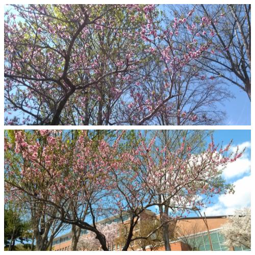 애증의 계절, 봄