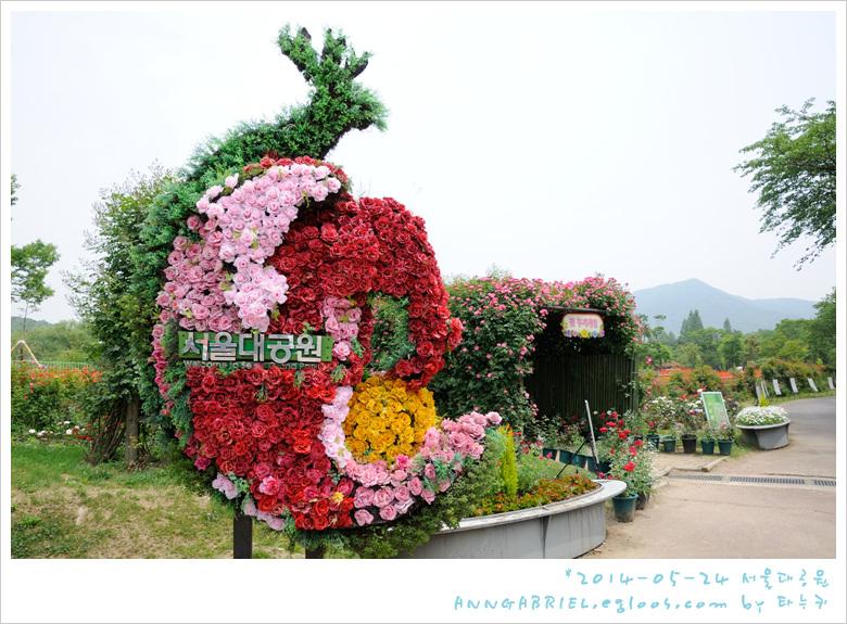 [서울대공원] 붉은 양귀비 밭으로~