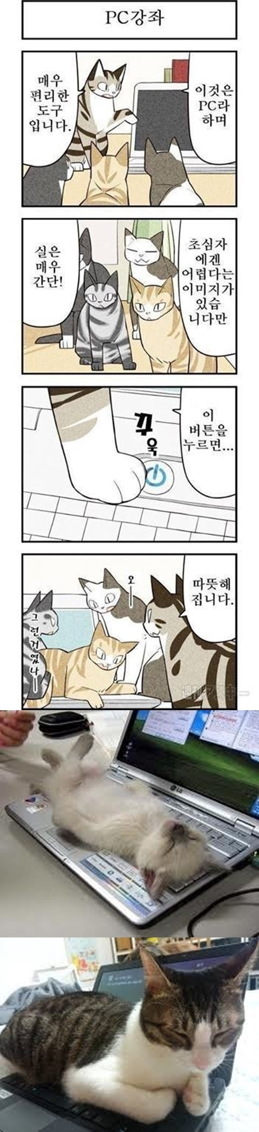 고양이의 노트북 사용법