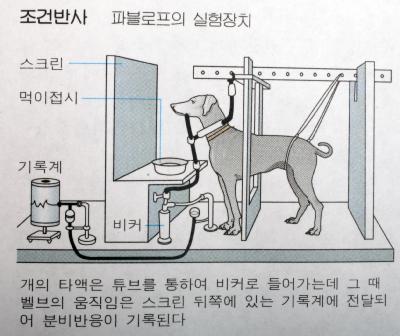 """[미디어]""""김정은 보도과 파블로프의 개?"""""""