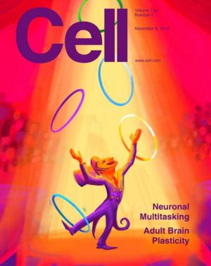 일인이역을 하는 신경세포의 비밀