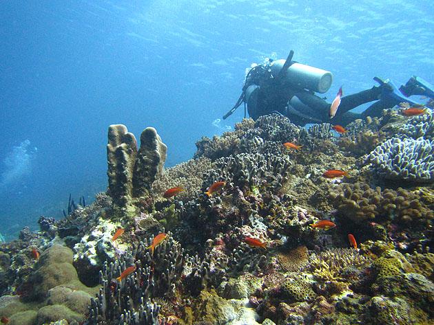 참치와 상어를 만나는 곳, 오키나와 바닷 속 풍경