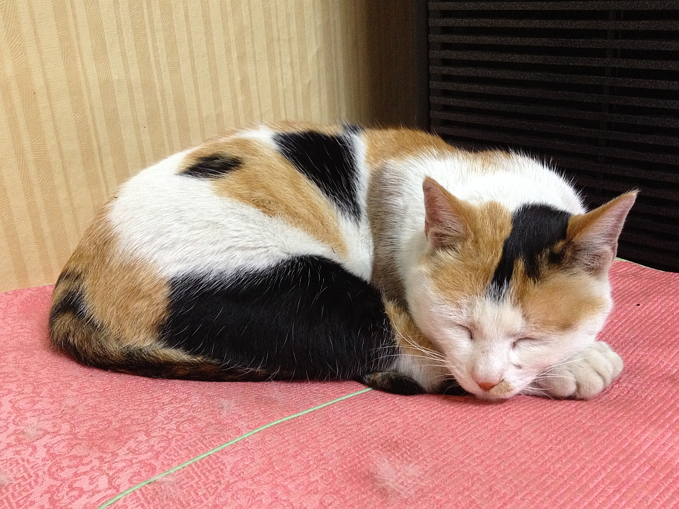 잠자다 하품하는 고양이