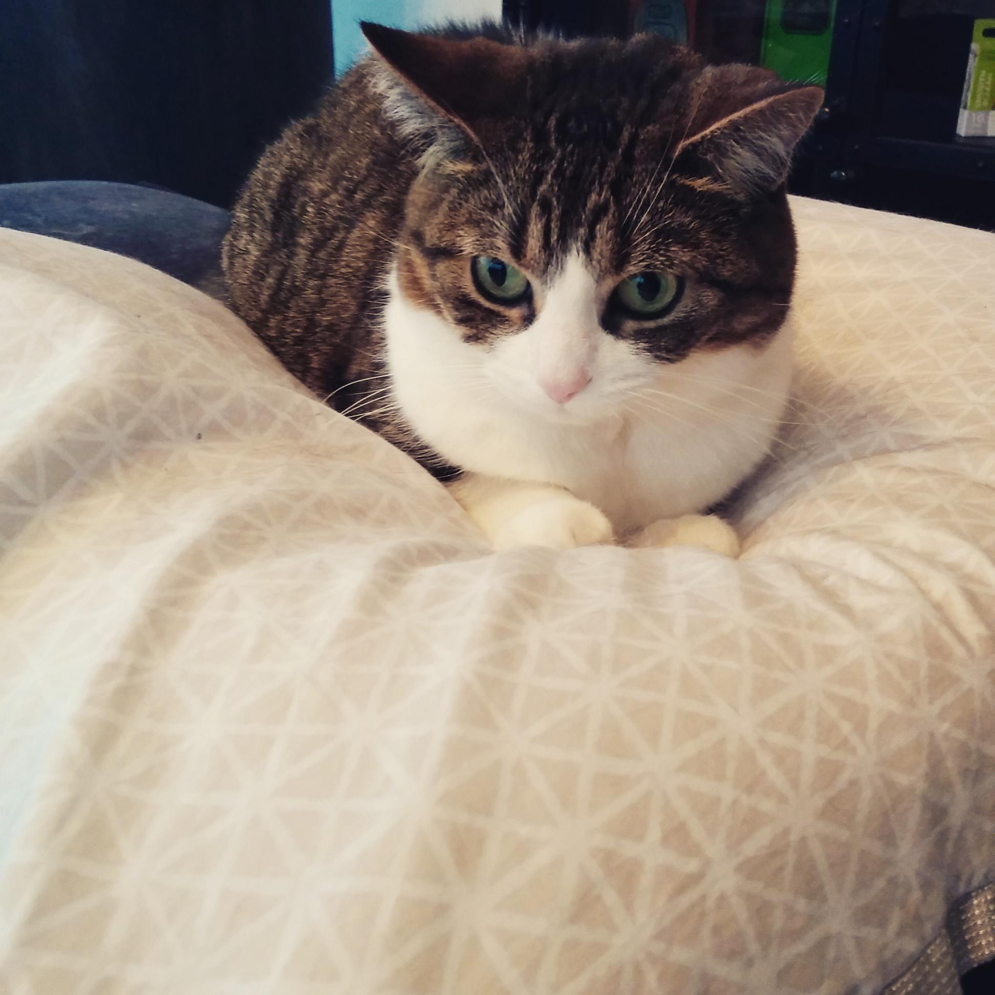 오랜만에 돌아온 이웃의 고양이.