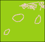 4월 11일 / 강제 꽃놀이(?) - PART Ⅰ