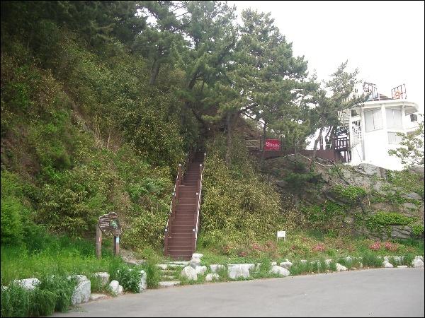 입하(入夏), 송화(松花), 이팝나무