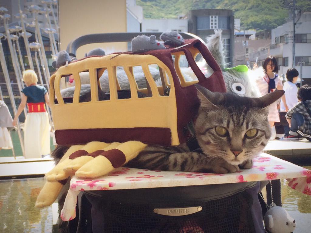 토토로의 고양이 버스 코스프레(?) 사진이 귀엽..