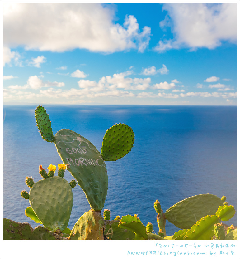 [하와이 오아후] 마카푸우 트레일 하산