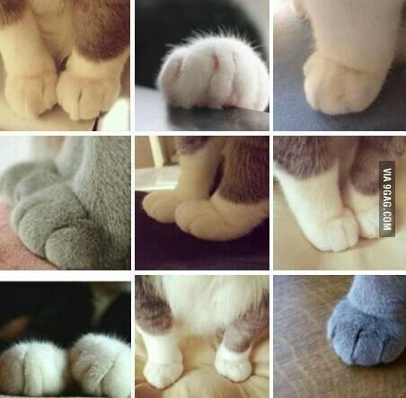 고양이 발