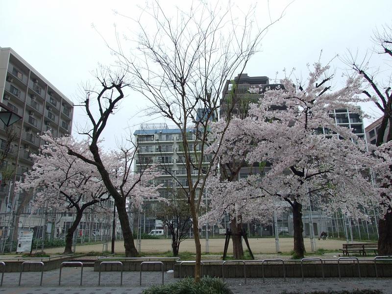 제5차 일본여행 3일차 (1) - 텐진역 주변 아침 산책