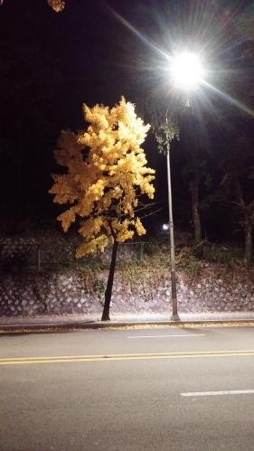 2014년 11월 소월길. 남산