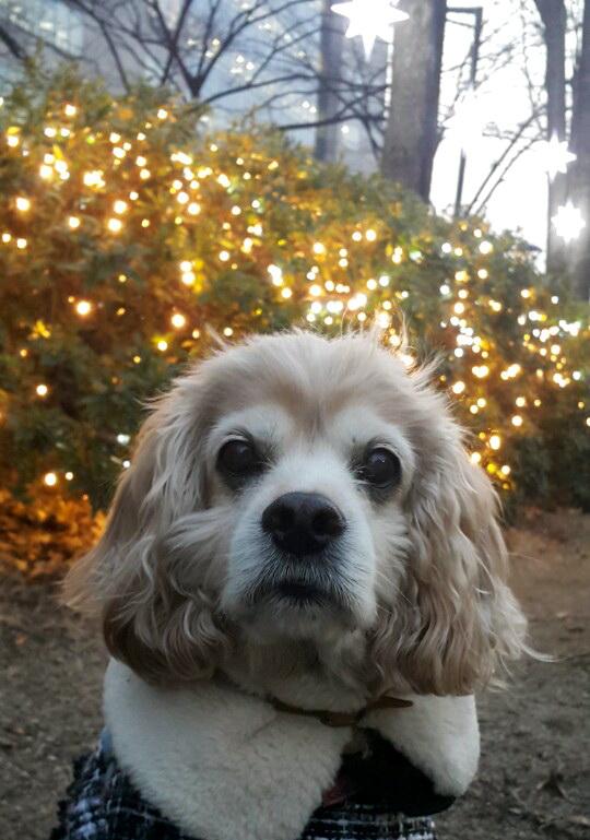 크리스마스 인사 다녀왔어용!