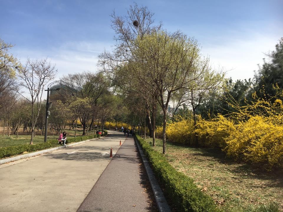 2016.4월 어린이대공원 벚꽃 구경
