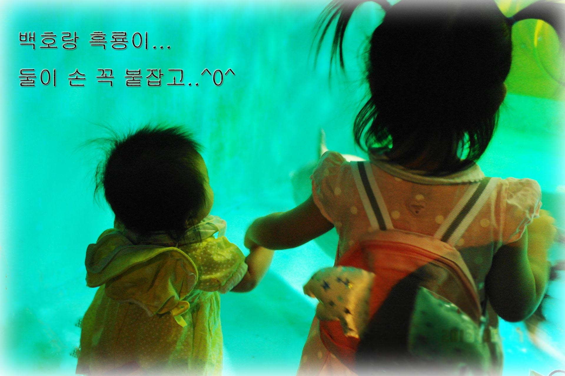 2013년 5월 흑룡이 서울 나들이!!