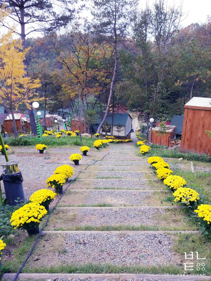 춘천 자연숲휴양림 글램핑