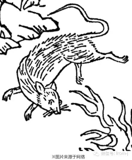 화광수(火光獸)