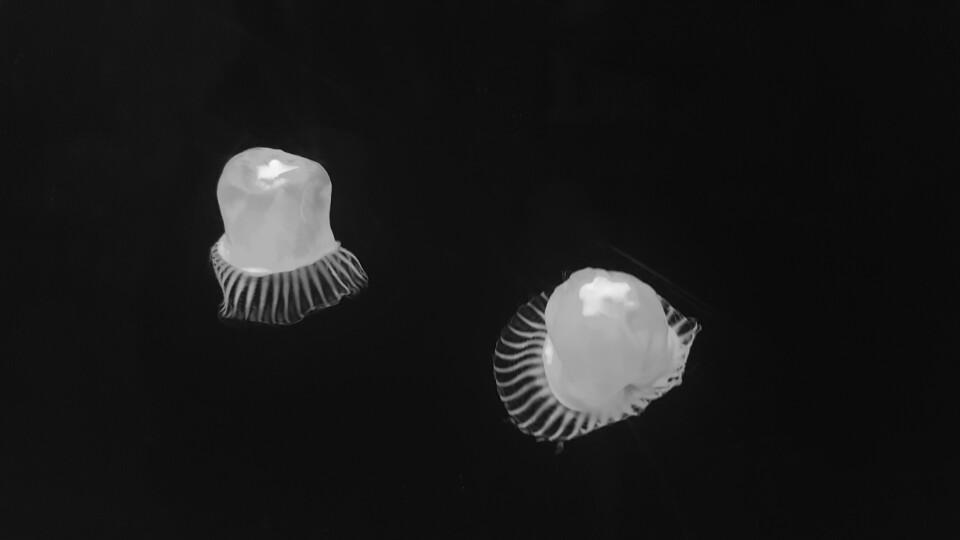 해파리 모형.