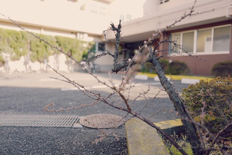 여행/도쿄, 여행의 목적 (0310금)