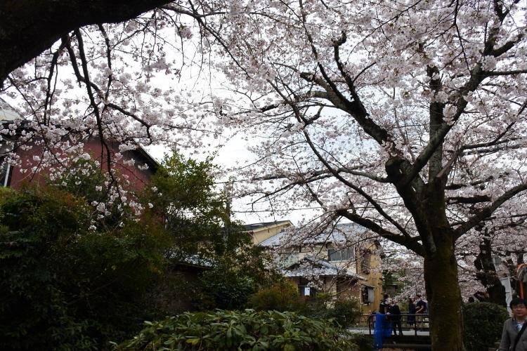 [일본여행] 오사카 교토 철학의 길