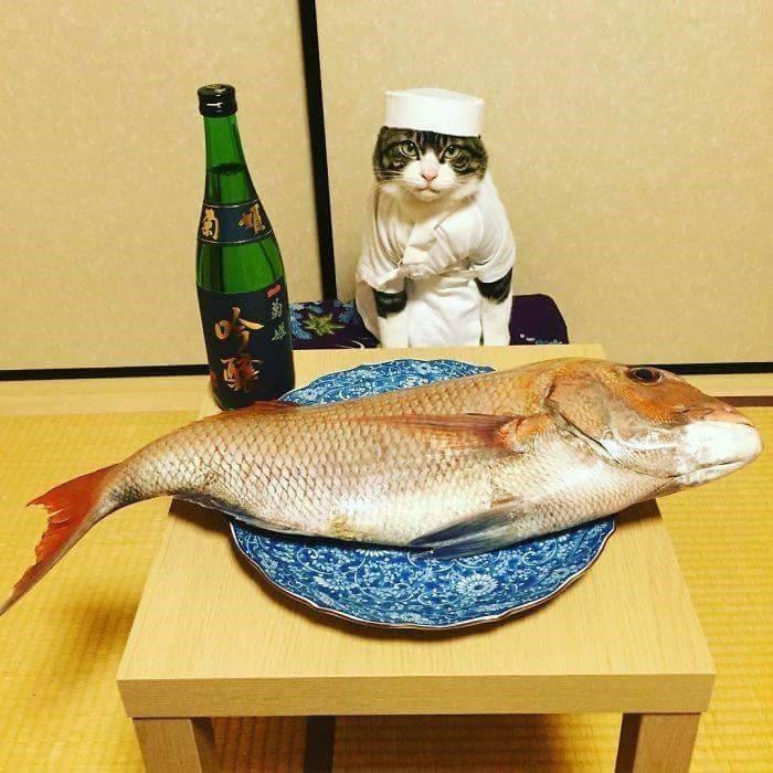 일본의 요리사 냥