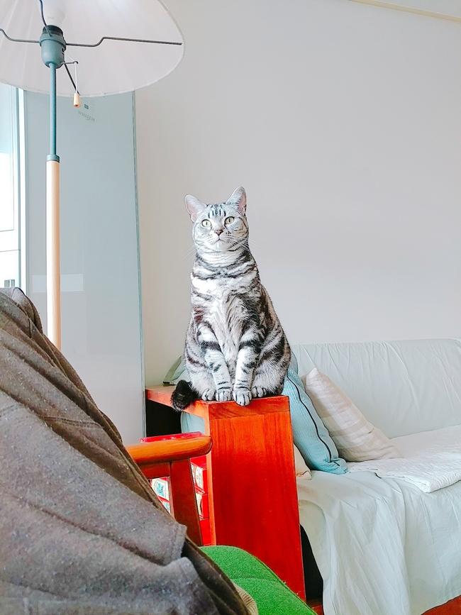 고양이 하루와 호피의 일상사진ㅋ