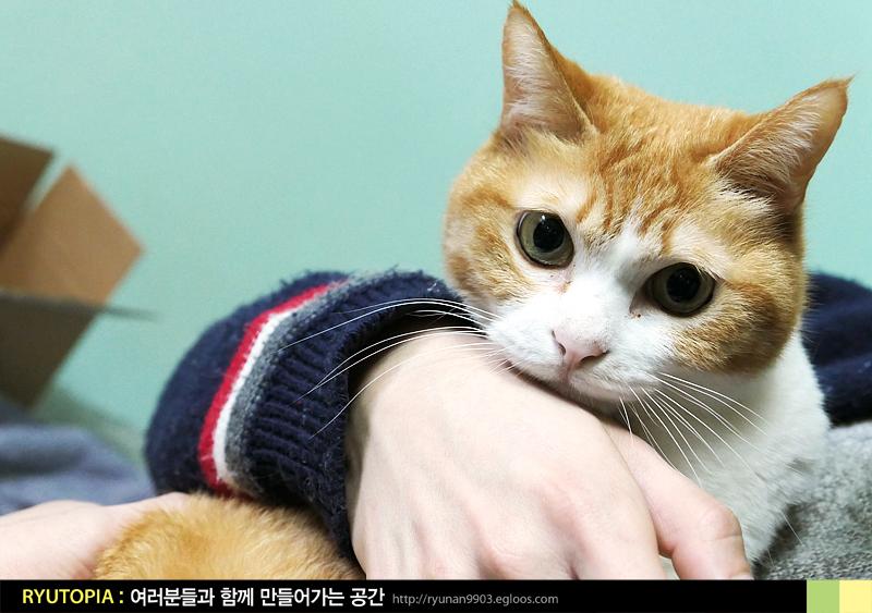 2017.5.7. 고양이 사진으로 정화