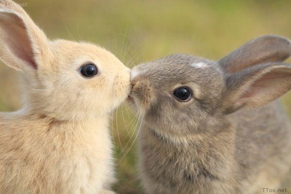 とにかく, 어쨌든, 토끼 뿔