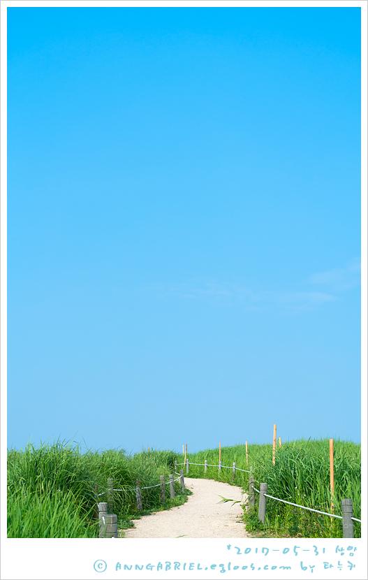 [상암] 하늘공원 청보리 나들이 - 2