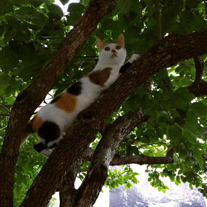 간만에 보는 미야의 나무타기