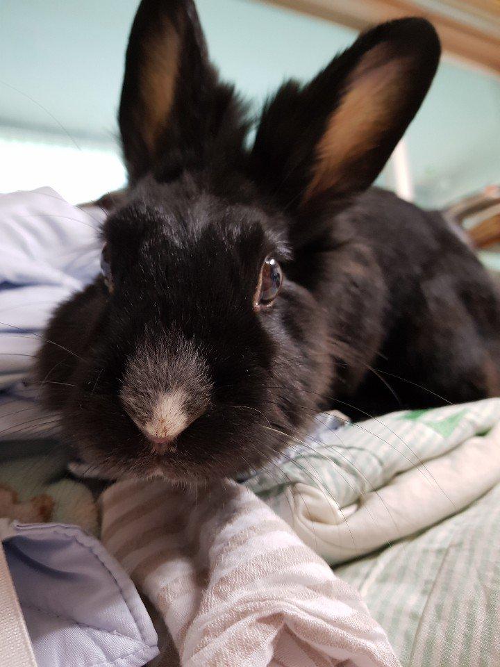 [토끼] 로로