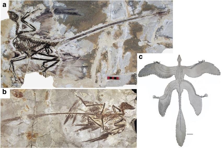 날개 4개 달린 생물은 어쩌면 쉽게 진화할수 있을지..