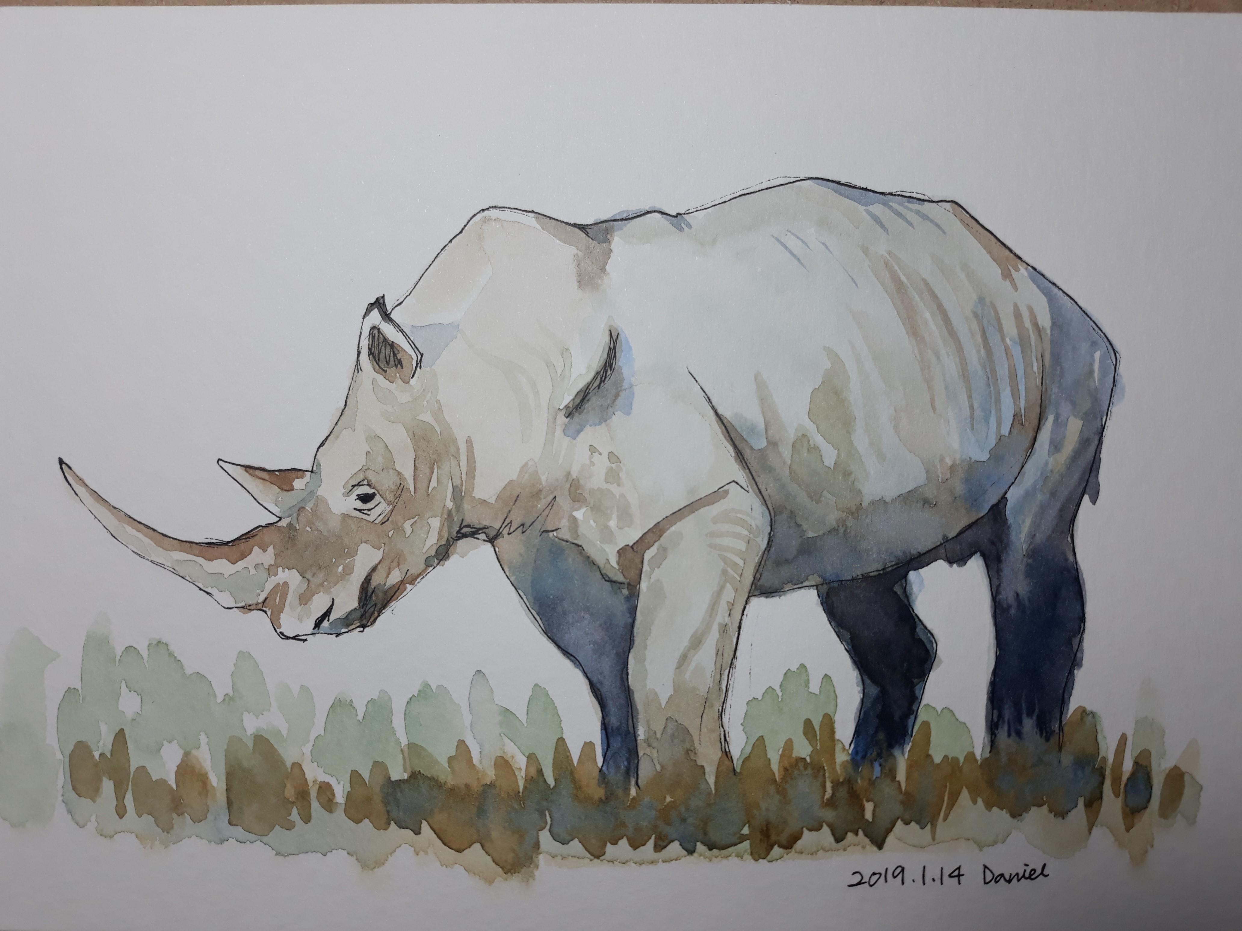코뿔소 그리기