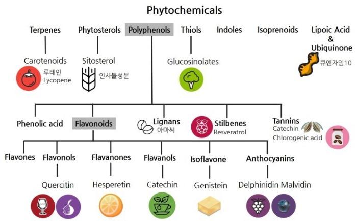파이토케미컬스(Phytochemicals)