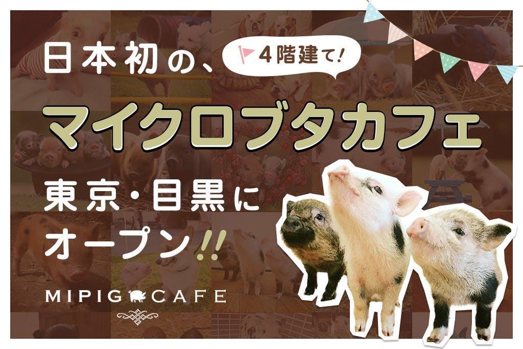 도쿄에 마이크로 돼지 카페가 생깁니다
