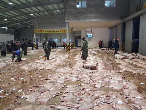 일본산 홍어 `방사능 비상`, 세슘 기준치 초과 검출